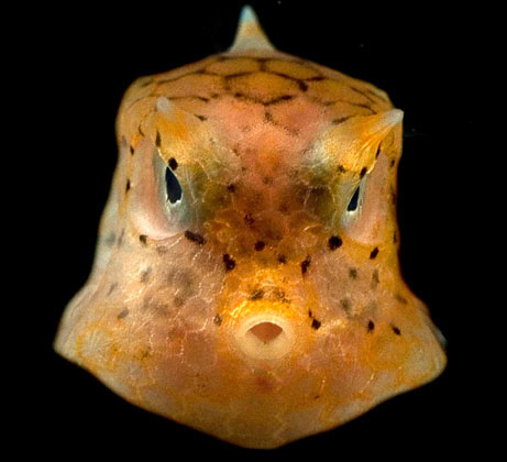 Phát hiện các sinh vật biển lạ ở ngoài khơi Philippines