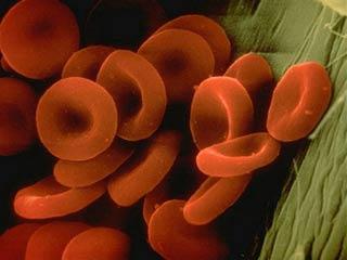 Đông máu và cơ chế chống đông: Nét đặc sắc của cơ thể