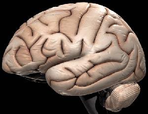 13% não người trưởng thành có bất thường