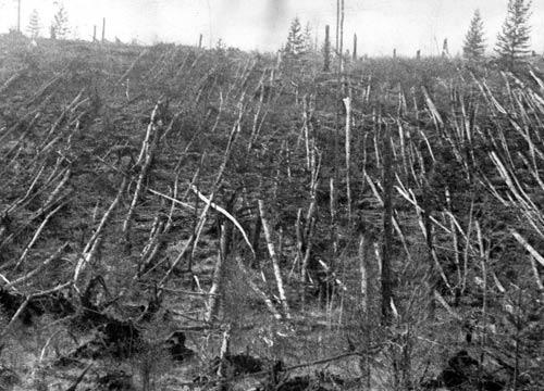 Công bố những bí ẩn về vụ nổ Tunguska