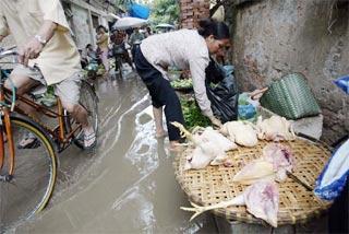 Miền Trung: Nước lũ đe dọa phát tán cúm gia cầm