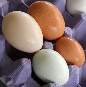 Bảo quản trứng vịt bằng màng bọc nhân tạo