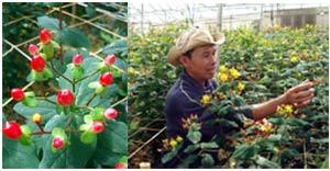 Đà Lạt: Xuất hiện giống hoa lạ, quý hiếm