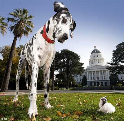 Cuộc hội ngộ của chú chó cao nhất và nhỏ nhất thế giới