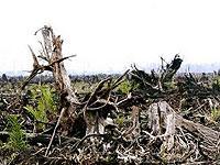 Asean đối phó với sự thay đổi khí hậu