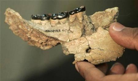 Phát hiện thêm hóa thạch xương hàm 10 triệu tuổi tại Kenya