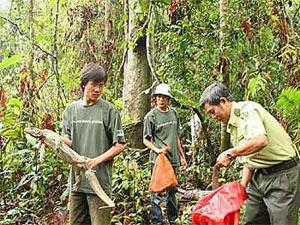 TP.HCM: Thả 43 động vật quý về rừng