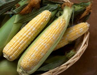 Dự đoán chất lượng và sản lượng bắp ngọt bằng mô hình vụ mùa mới