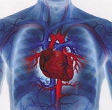 Tỉ lệ người chết vì bệnh tim đang gia tăng trong giới trẻ