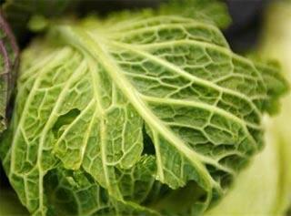 Ăn trái cây và rau cải giảm tỉ lệ ung thư