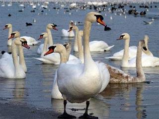 H7N3: Týp vi-rút phổ biến ở các loài chim