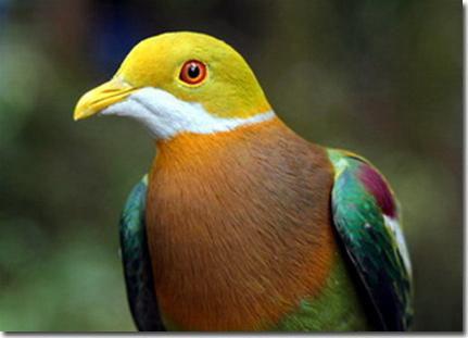 Phát hiện hai loài động vật mới tại Papua