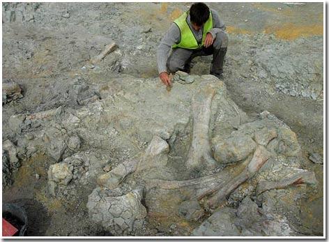 """Phát hiện """"nghĩa địa"""" khủng long ở Tây Ban Nha"""
