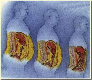 Tế bào dự trữ chất béo như thế nào?