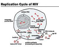 Vắc-xin HIV/AIDS: Cuộc tìm kiếm vô vọng!