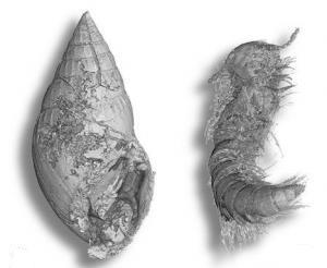 Phát hiện khối hổ phách đục 100 triệu năm tuổi chứa nhóm 356 động vật
