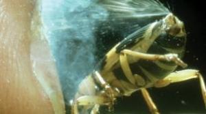 Ứng dụng công nghệ phun xịt từ bọ Bombardier Beetle