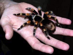 Khám phá tâm lý về nỗi sợ rắn và nhện