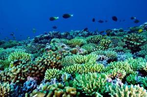 Vi sinh vật có thể là tác nhân giết hại san hô