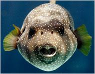 Những âm thanh bí ẩn của loài cá trong lòng đại dương