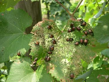 Sâu bọ ăn nhiều thực vật hơn ở môi trường có nồng độ CO<sub>2</sub> cao