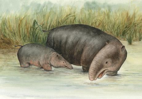 Tổ tiên voi cổ đại sống dưới nước