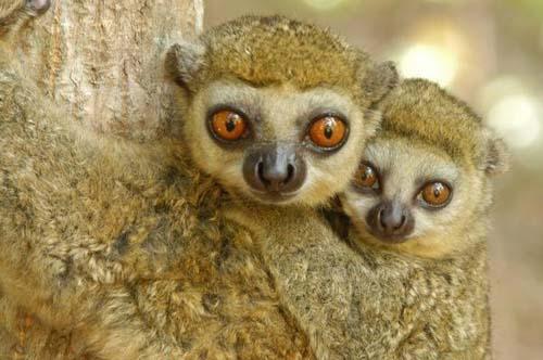 Nghiên cứu động thực vật hoang dã trên diện rộng ở Madagascar nhằm thiết lập bản đồ chỉ dẫn bảo tồn