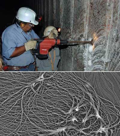 Hợp chất thực vật cổ phát hiện trong tường muối của nơi xử lý chất thải