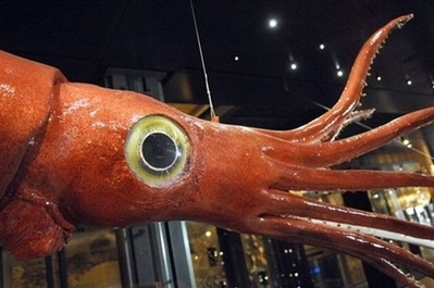 Đôi mắt to nhất trong thế giới động vật