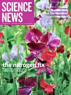 Cố định ni-tơ: mối quan hệ giữa thực vật và vi khuẩn (Phần 1)