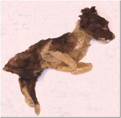 Chó cổ đại có vai trò đưa người đã khuất sang thế giới bên kia