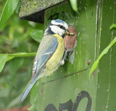 Chim sử dụng khứu giác để phát hiện ra kẻ thù