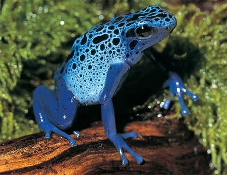 Các loài ếch sặc sỡ trong tự nhiên