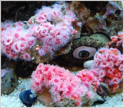 Nghiên cứu khoa học vật liệu từ sinh vật biển