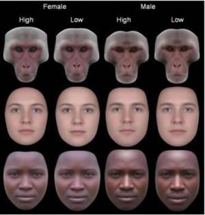 Tại sao sự cân xứng nét mặt là đặc điểm hấp dẫn