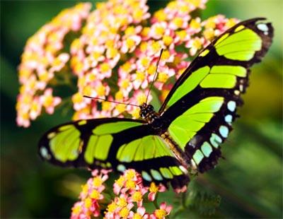 Những loài bướm xinh đẹp