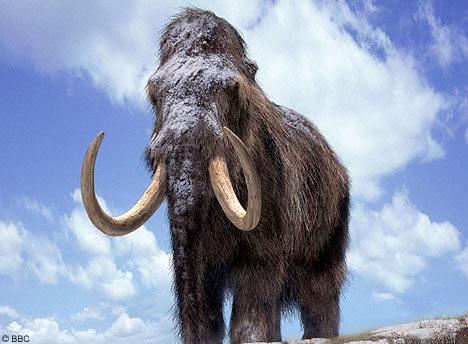 Động vật có vú to lớn sống khó khăn hơn, tuyệt chủng nhanh hơn