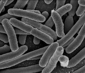 Vi khuẩn nhạy cảm với màng sinh học nguy hiểm