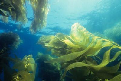 Chất ô nhiễm Nitơ trong nước biển đe dọa bầu khí quyển