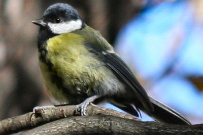 Khúc tình ca chiến lược thầm kín của các loài chim