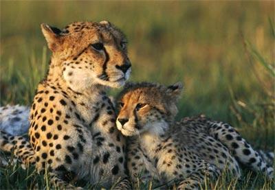 Mẹ và con trong thế giới động vật