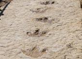 Dấu vết khủng long hiếm có ở Bán đảo Ả-rập