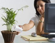 Trồng cây trong phòng giúp nhân viên thoải mái hơn