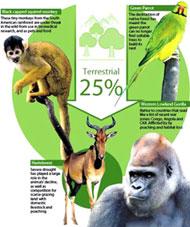 Mỗi ngày thế giới mất đi 150 loài động, thực vật