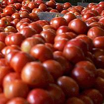 Cà chua khô ngăn ngừa bệnh ung thư tuyến tiền liệt tốt nhất