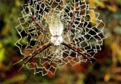 Sự kỳ diệu của mạng nhện trong tự nhiên