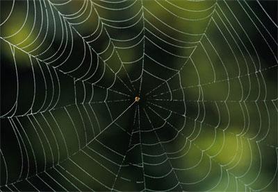 Tơ nhện có thể mang đặc tính của lò xo hoặc cao su