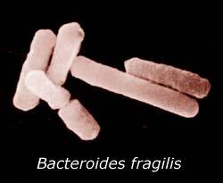 Vi khuẩn có lợi bảo vệ chúng ta như thế nào?