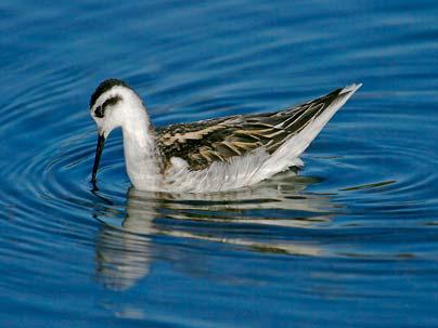 Bí mật chiếc mỏ kỳ diệu ở loài chim nước