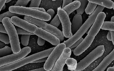 Vi khuẩn đoán được sự thay đổi môi trường